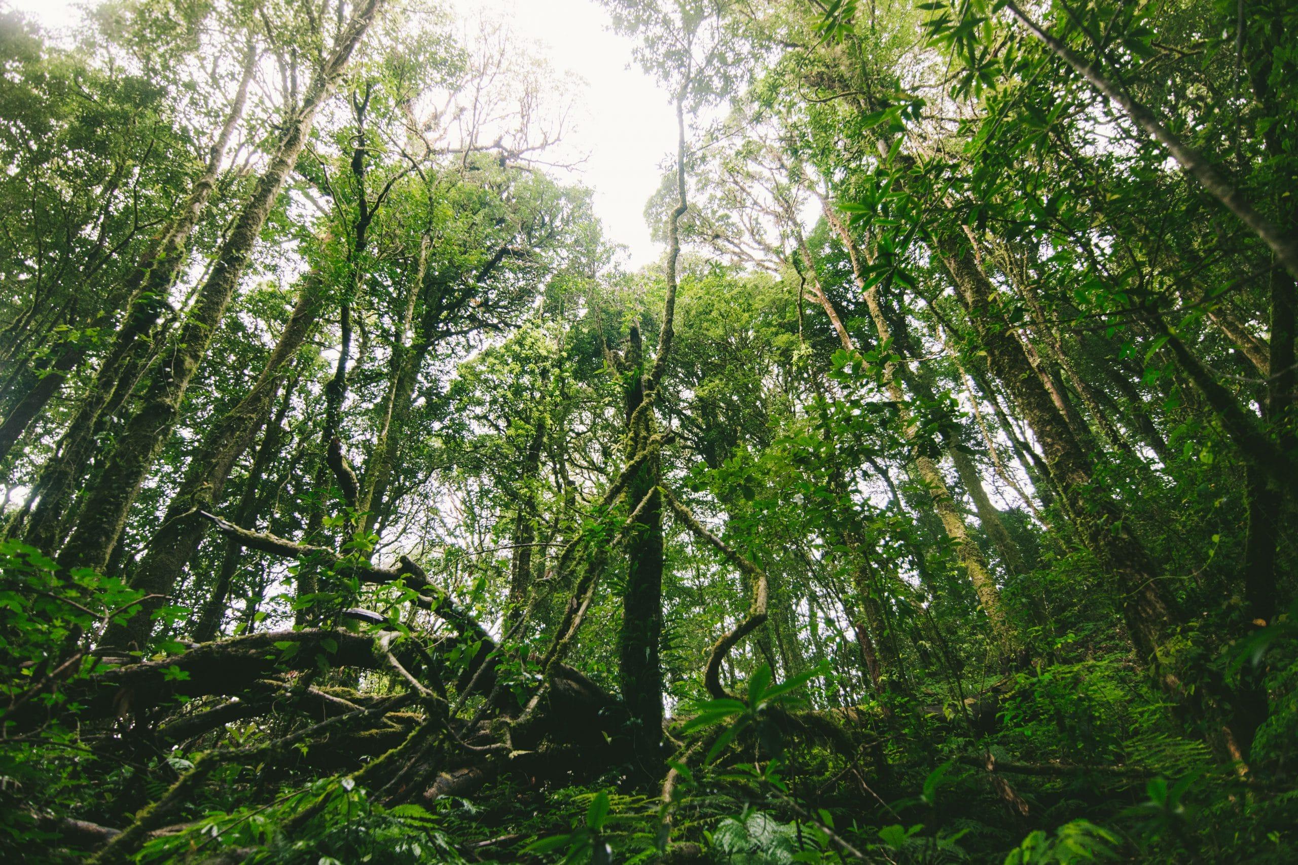 Forests under threat